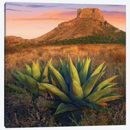 Casa Grande Butte With Agave In Foreground, Big Bend National Park, Texas Canvas Print #TFI189} by Tim Fitzharris Art Print