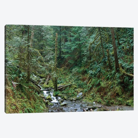 Cascade Along Eagle Creek Flowing Through Temperate Old Growth Rainforest, Columbia River Gorge, Oregon Canvas Print #TFI190} by Tim Fitzharris Canvas Wall Art