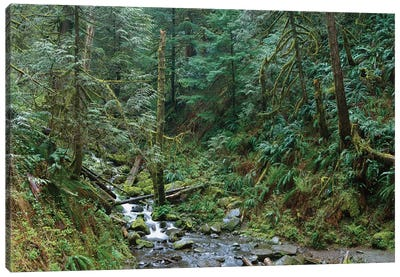 Cascade Along Eagle Creek Flowing Through Temperate Old Growth Rainforest, Columbia River Gorge, Oregon Canvas Art Print