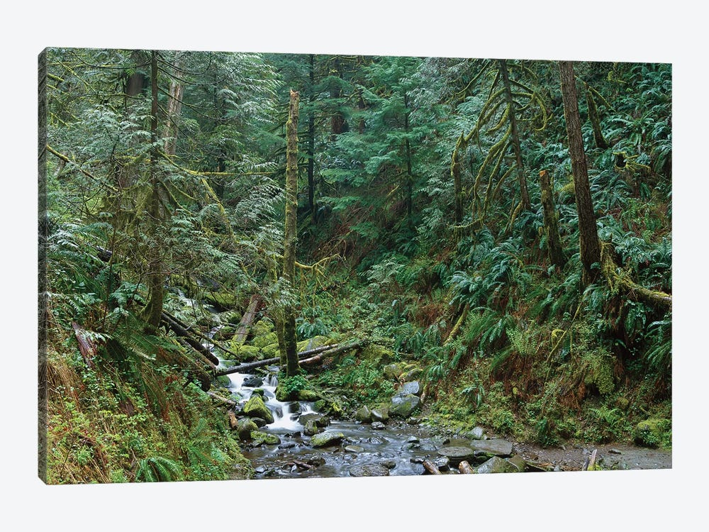 Cascade Along Eagle Creek Flowing Through Temperate Old Growth Rainforest, Columbia River Gorge, Oregon by Tim Fitzharris 1-piece Canvas Art