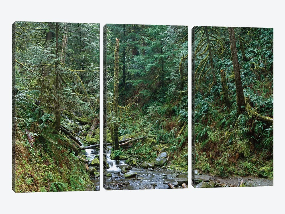 Cascade Along Eagle Creek Flowing Through Temperate Old Growth Rainforest, Columbia River Gorge, Oregon by Tim Fitzharris 3-piece Canvas Artwork