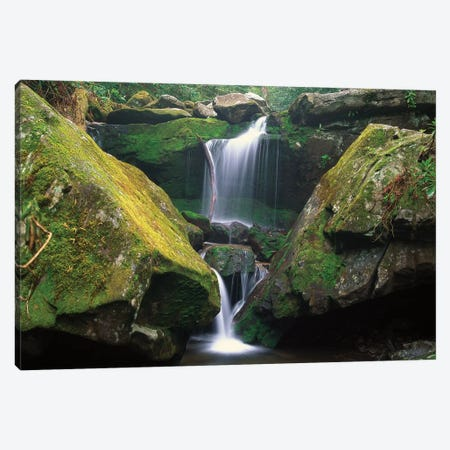 Cascade Near Grotto Falls, Great Smoky Mountains National Park, Tennessee Canvas Print #TFI191} by Tim Fitzharris Canvas Art