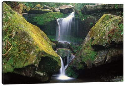 Cascade Near Grotto Falls, Great Smoky Mountains National Park, Tennessee Canvas Art Print