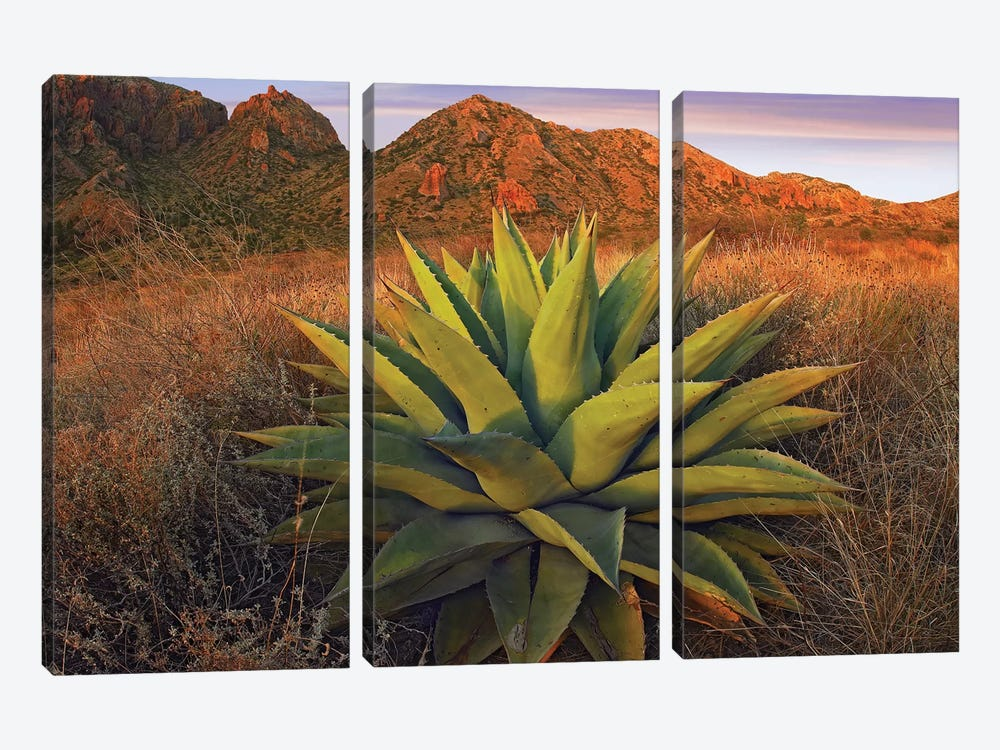 Agave Plants And Chisos Mountains Seen From Chisos Basin, Big Bend National Park, Chihuahuan Desert, Texas by Tim Fitzharris 3-piece Canvas Art