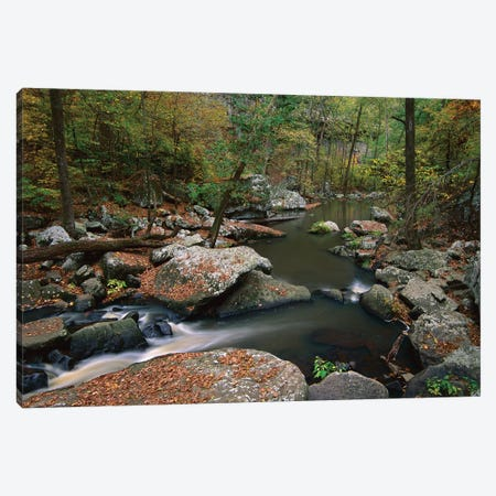Cedar Creek Flowing Through Deciduous Forest, Petit Jean State Park, Arkansas Canvas Print #TFI206} by Tim Fitzharris Art Print