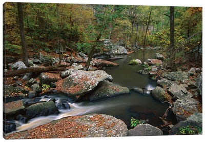 Cedar Creek Flowing Through Deciduous Forest, Petit Jean State Park, Arkansas Canvas Art Print