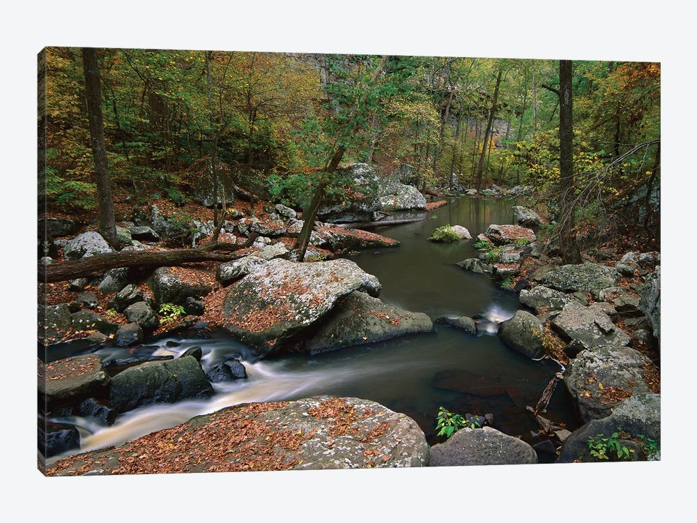 Cedar Creek Flowing Through Deciduous Forest, Petit Jean State Park, Arkansas by Tim Fitzharris 1-piece Art Print