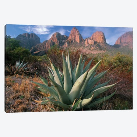 Chisos Agave And The Chisos Mountains, Big Bend National Park, Texas II Canvas Print #TFI209} by Tim Fitzharris Canvas Wall Art