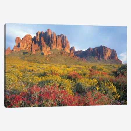 Chuparosa And Brittlebush, Superstition Mountains, Arizona Canvas Print #TFI210} by Tim Fitzharris Canvas Art Print