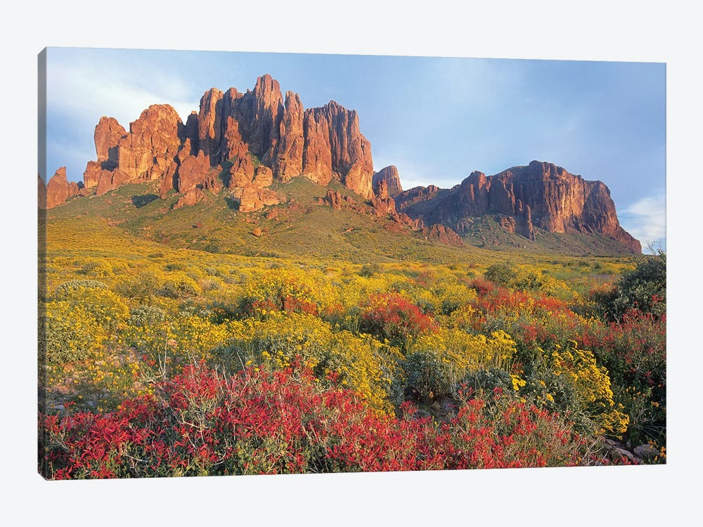 Chuparosa And Brittlebush, Superstition Mountains, Arizona by Tim Fitzharris 1-piece Canvas Artwork