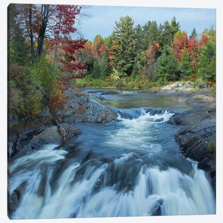 Chutes Provincial Park, Ontario, Canada II Canvas Print #TFI215} by Tim Fitzharris Canvas Artwork
