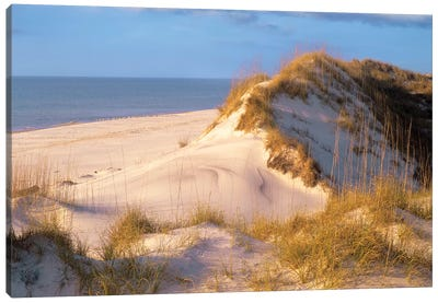 Coastal Sand Dunes, Saint Joseph Peninsula, Florida Canvas Art Print