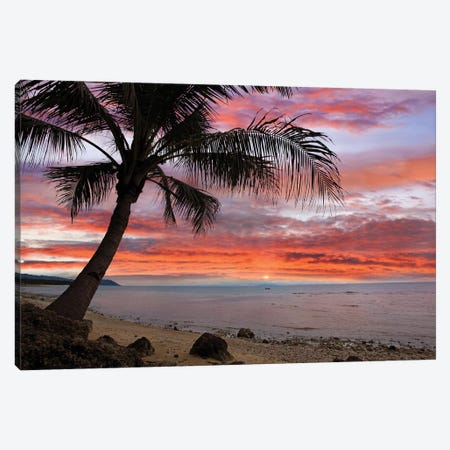 Coconut Palm At Sunset Near Dimiao, Bohol Island, Philippines Canvas Print #TFI238} by Tim Fitzharris Art Print