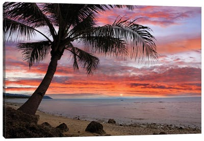 Coconut Palm At Sunset Near Dimiao, Bohol Island, Philippines Canvas Art Print