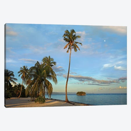 Coconut Palm Trees On Pamilacan Island, Philippines Canvas Print #TFI239} by Tim Fitzharris Art Print