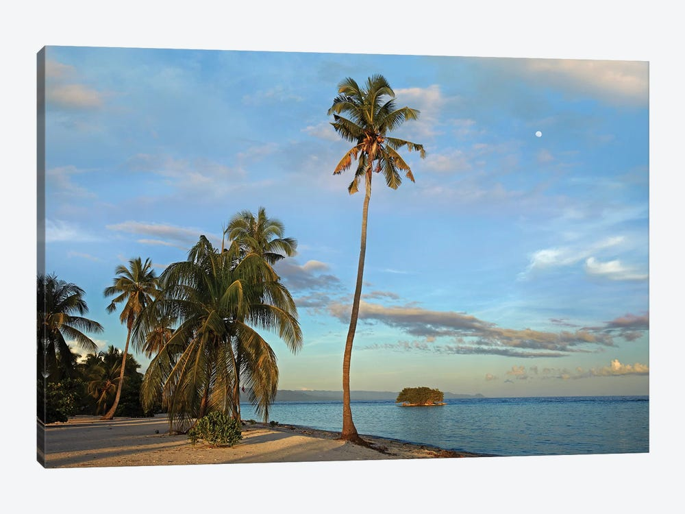 Coconut Palm Trees On Pamilacan Island, Philippines by Tim Fitzharris 1-piece Canvas Print