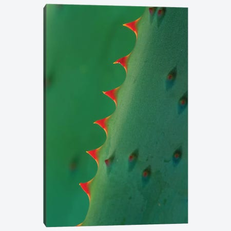 Aloe Spines Canvas Print #TFI23} by Tim Fitzharris Canvas Wall Art