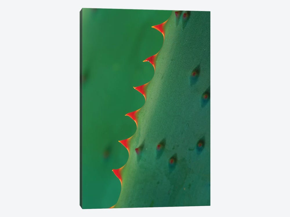 Aloe Spines by Tim Fitzharris 1-piece Canvas Print