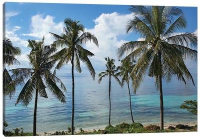 Coconut Palm Trees, Bikini Beach, Panglao Island, Philippines Canvas Art Print