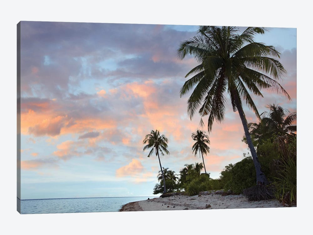Coconut Palm Trees, Pamilacan Island, Bohol Island, Philippines by Tim Fitzharris 1-piece Canvas Wall Art