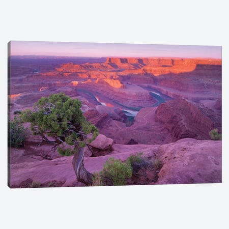 Colorado River Flowing Through Canyons Of Dead Horse Point State Park, Utah Canvas Print #TFI247} by Tim Fitzharris Canvas Print