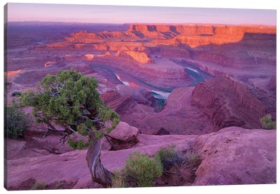 Colorado River Flowing Through Canyons Of Dead Horse Point State Park, Utah Canvas Art Print