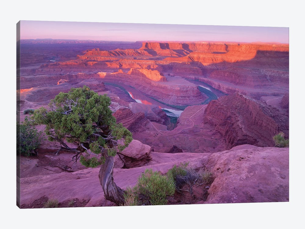Colorado River Flowing Through Canyons Of Dead Horse Point State Park, Utah by Tim Fitzharris 1-piece Canvas Wall Art