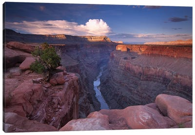 Colorado River From Toroweap Overlook, Grand Canyon National Park, Arizona II Canvas Art Print