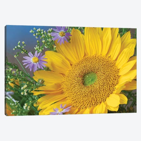 Common Sunflower And Asters, North America I Canvas Print #TFI253} by Tim Fitzharris Art Print