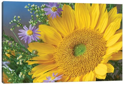Common Sunflower And Asters, North America I Canvas Art Print