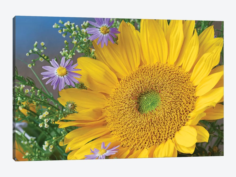 Common Sunflower And Asters, North America I by Tim Fitzharris 1-piece Canvas Print