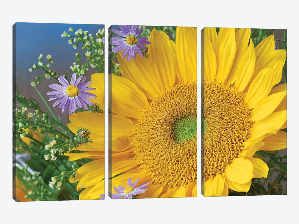 Common Sunflower And Asters, North America I by Tim Fitzharris 3-piece Canvas Art Print