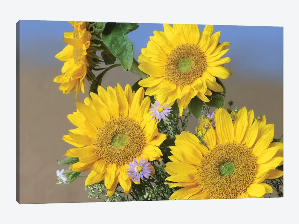 Common Sunflower And Asters, North America II by Tim Fitzharris 1-piece Canvas Wall Art