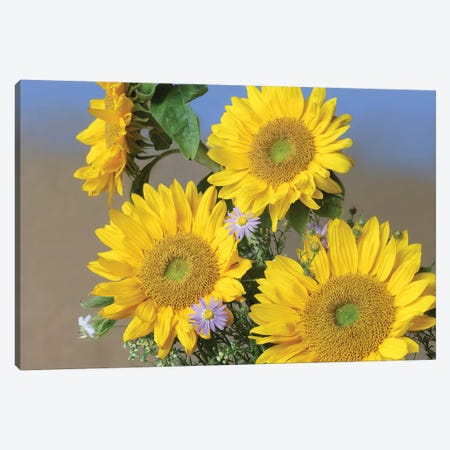 Common Sunflower And Asters, North America II 3-Piece Canvas #TFI254} by Tim Fitzharris Canvas Artwork