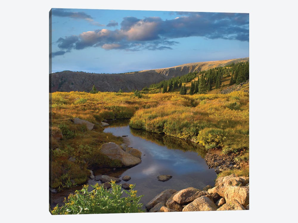Alpine Stream, Rollins Pass Near Winter Park, Colorado by Tim Fitzharris 1-piece Canvas Art Print