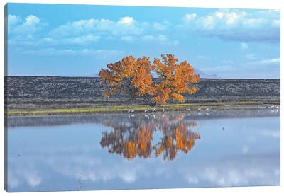 Cottonwood And Cranes, Autumn Foliage, Bosque Del Apache National Wildlife Refuge, New Mexico Canvas Art Print