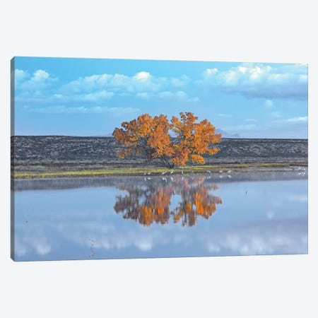 Cottonwood And Cranes, Autumn Foliage, Bosque Del Apache National Wildlife Refuge, New Mexico Canvas Print #TFI266} by Tim Fitzharris Canvas Print