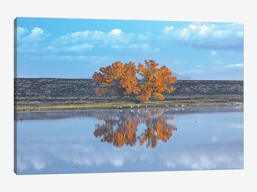 Cottonwood And Cranes, Autumn Foliage, Bosque Del Apache National Wildlife Refuge, New Mexico by Tim Fitzharris 1-piece Canvas Print