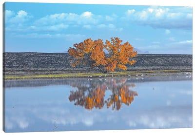 Cottonwood And Cranes, Autumn Foliage, Bosque Del Apache National Wildlife Refuge, New Mexico Canvas Art Print