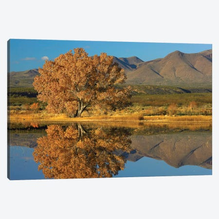 Cottonwood Fall Foliage With Magdalena Mountains Behind, New Mexico Canvas Print #TFI267} by Tim Fitzharris Canvas Print