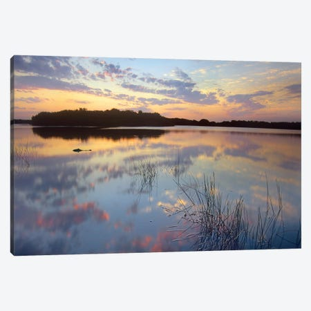 American Alligator Floating In Paurotis Pond, Everglades National Park, Florida Canvas Print #TFI26} by Tim Fitzharris Canvas Art Print