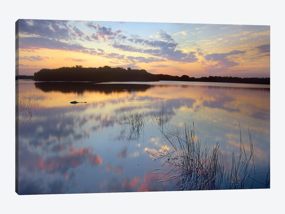 American Alligator Floating In Paurotis Pond, Everglades National Park, Florida by Tim Fitzharris 1-piece Canvas Wall Art