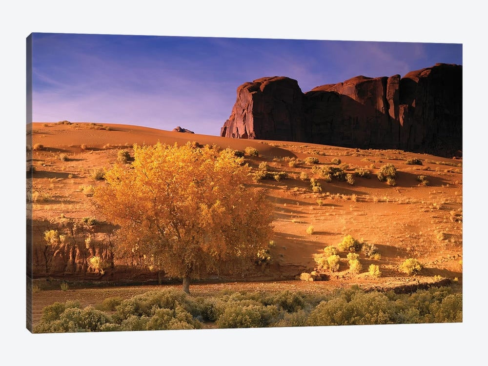 Cottonwood Tree And Coyote Bush With Sand Dunes, Monument Valley, Arizona by Tim Fitzharris 1-piece Canvas Wall Art