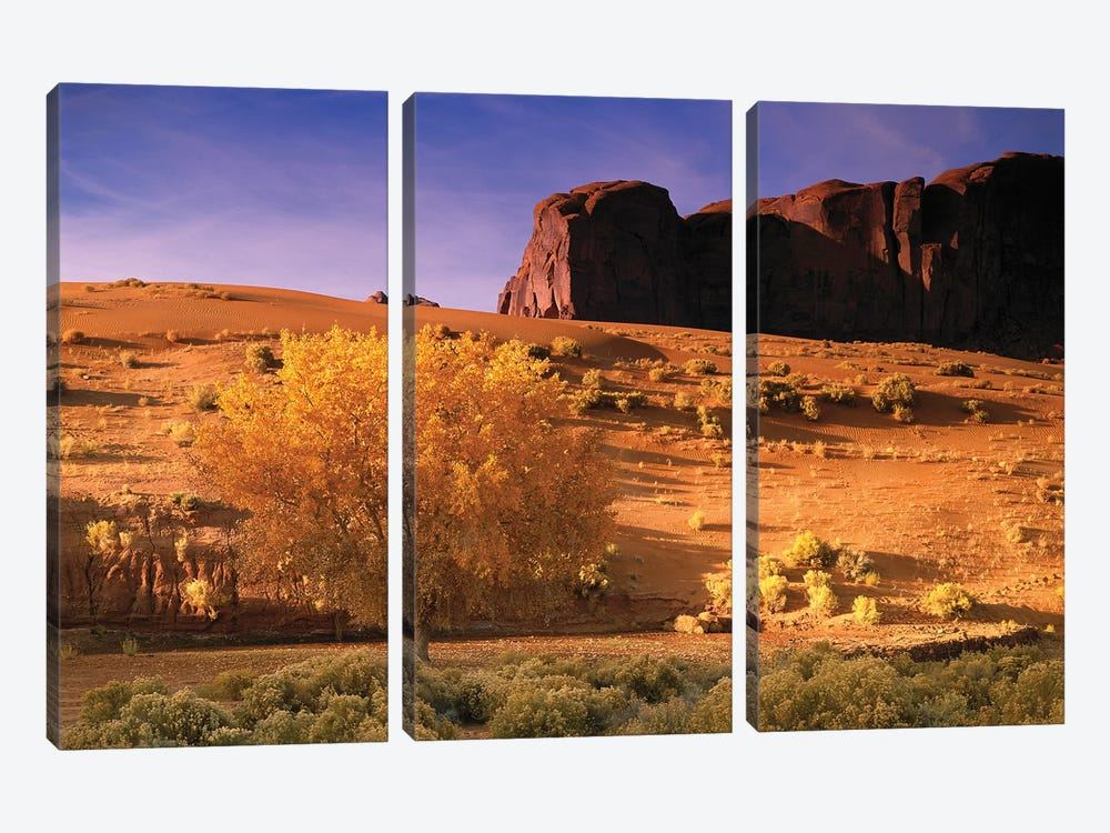 Cottonwood Tree And Coyote Bush With Sand Dunes, Monument Valley, Arizona by Tim Fitzharris 3-piece Canvas Artwork