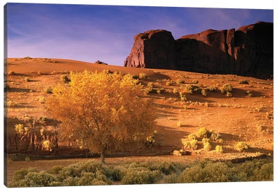 Cottonwood Tree And Coyote Bush With Sand Dunes, Monument Valley, Arizona Canvas Art Print