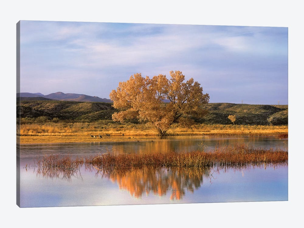 Cottonwood Tree And Sandhill Crane Flock In Pond, Bosque Del Apache National Wildlife Refuge, New Mexico by Tim Fitzharris 1-piece Canvas Print