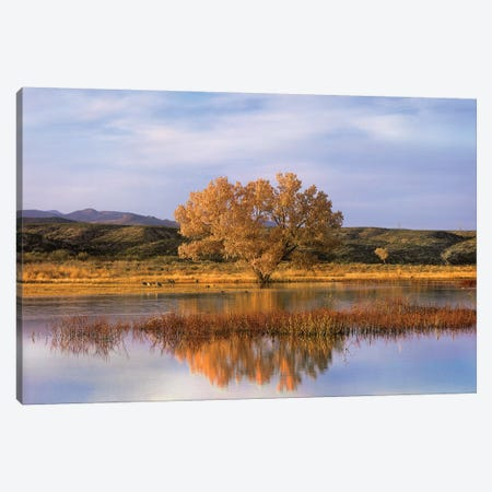 Cottonwood Tree And Sandhill Crane Flock In Pond, Bosque Del Apache National Wildlife Refuge, New Mexico Canvas Print #TFI271} by Tim Fitzharris Canvas Art Print