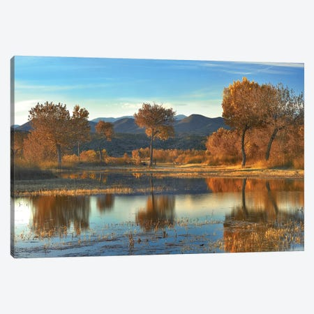 Cottonwood Trees And Willows, Fall Foliage, Bosque Del Apache National Wildlife Refuge, New Mexico Canvas Print #TFI272} by Tim Fitzharris Art Print