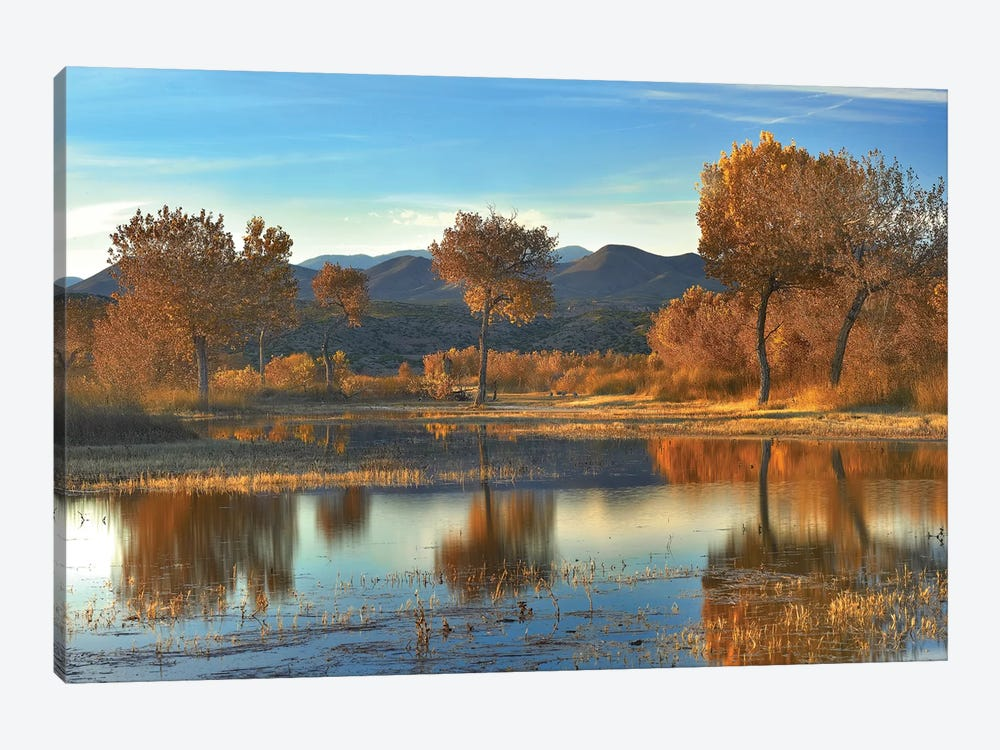 Cottonwood Trees And Willows, Fall Foliage, Bosque Del Apache National Wildlife Refuge, New Mexico by Tim Fitzharris 1-piece Canvas Art