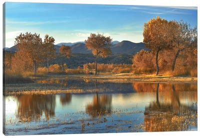 Cottonwood Trees And Willows, Fall Foliage, Bosque Del Apache National Wildlife Refuge, New Mexico Canvas Art Print